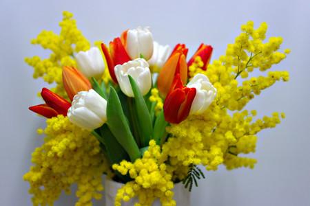 tulipani_mimose